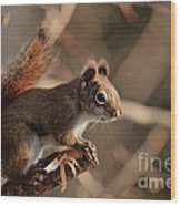 Chippy Perched Wood Print