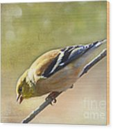 Chirping Gold Finch Wood Print