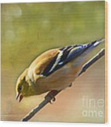 Chirping Gold Finch - Painted Effect Wood Print