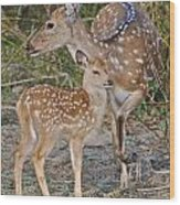 Chital Deer And Fawn Wood Print