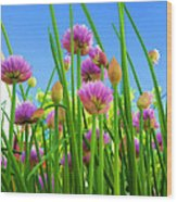 Chive Flowers And Buds Wood Print by Jo Ann