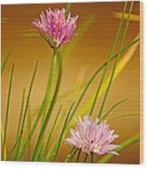 Chives Flowers Wood Print