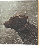 Chocolate Lab In Water Watercolor Portrait Wood Print