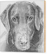 Chocolate Lab Sketched In Charcoal Wood Print