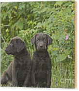 Chocolate Labrador Retriever Puppies Wood Print