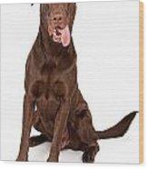Chocolate Labrador Retriever With Tongue Out Wood Print