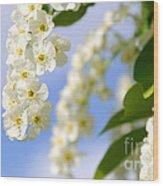 Choke Cherry In Bloom Wood Print