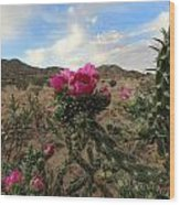 Cholla Cactus Blooming In The Sandia Foothills Wood Print