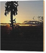 Cholla Cactus Sunset Wood Print