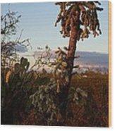Cholla Cactus View Wood Print