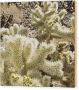 Cholla (cylindropuntia Bigelovii) Cactus Wood Print