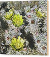 Cholla Flowers Wood Print