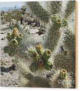 Cholla Garden Wood Print