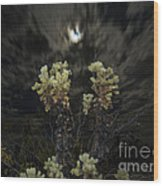 Cholla Light - Joshua Tree National Park Wood Print
