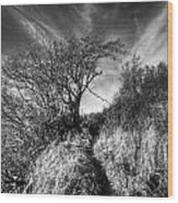 Chosen Path Wood Print