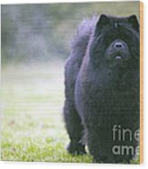 Chow Chow Dog Wood Print