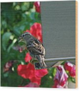 Chow Time At The Bird Feeder Wood Print