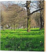 Christchurch Gardens Wood Print