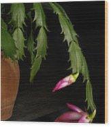 Christmas Cactus Wood Print