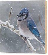 Christmas Card Bluejay Wood Print