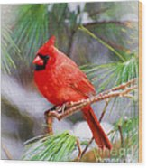 Christmas Cardinal - Male Wood Print