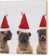 Christmas Caroling Dogs Wood Print