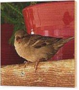 Christmas Finch Wood Print