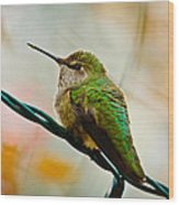 Christmas Humming Bird Wood Print