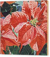 Christmas Poinsettia Magic Wood Print