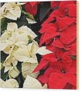 Christmas Poinsettia's Wood Print