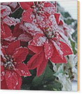 Christmas Poinsettia Flowers Wood Print