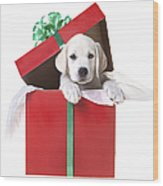 Christmas Puppy Wood Print by Diane Diederich