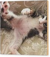 Christopher Paws Up Wood Print