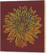 Chrysanthemum Fire Wood Print