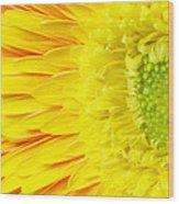 Chrysanthemum Flower Closeup Wood Print