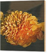 Chrysanthemum Gently Floating In The Fountain Of Campo De Fiori - Rome - Italy Wood Print