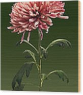 Chrysanthemum Shelbers Wood Print