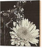 Chrysanthimum Wood Print