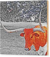 Cibolo Longhorn Wood Print