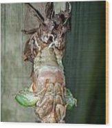 Cicada Emerging Wood Print