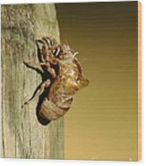 Cicada Shell Wood Print