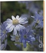 Cineraria  1217 Wood Print by Terri Winkler