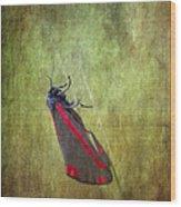 Cinnabar Moth Art Texture Wall Decor. Wood Print