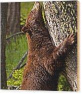 Cinnamon Boar Black Bear Wood Print