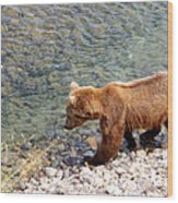 Cinnamon-colored Grizzly Bear By Moraine River In Katmai Np-ak  Wood Print