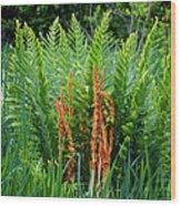 Cinnamon Fern Wood Print