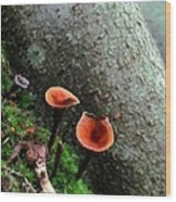 Cinnamon Polypore  Wood Print