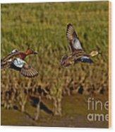 Cinnamon Teal Pair In Flight Wood Print