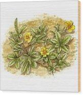 Cinquefoil (potentilla Reptans), Artwork Wood Print