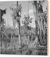 Circle B Swamp Wood Print
